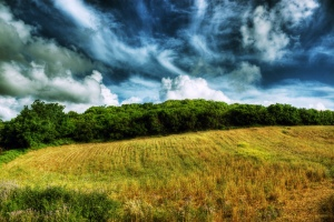 Summer field by Theophilos Papadopoulos